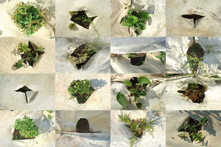 trousplantes_site